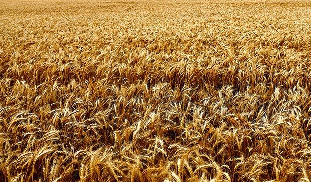 рынок зерновых
