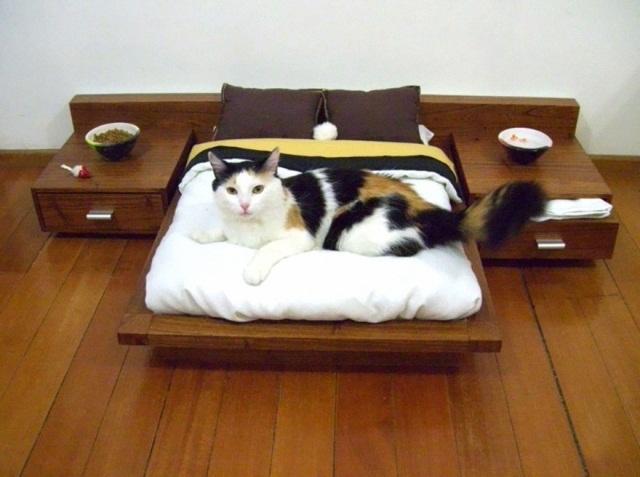 кошачья спальня
