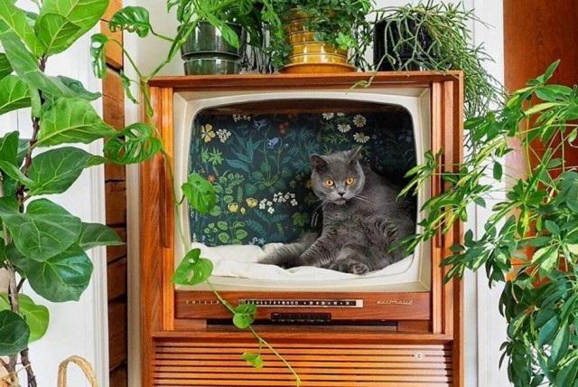дом в телевизоре