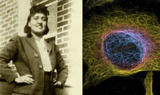 исследования клеток